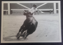 CAMARGUE - 11E 12 - Perfection Superbe Razet De Jacky Simeon Sur Fidélio De Laurent, Biou D'Or 1985 - Sonstige Gemeinden