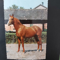 Joli Cheval - Horses