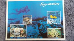 CPM SEYCHELLES CORAUX POISSONS PLONGEUR PLONGEE ED N FRICK - Seychelles