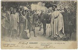 FRANCE - GUINEE FRANCAISE - CONAKRY - Concours Agricole - La Suite Du Chef Manguédounké - 1902 - French Guinea