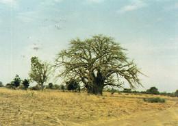 ~~ Le Baobab , à Ses Pieds Des Cases Mossi (beau Timbre) - Burkina Faso