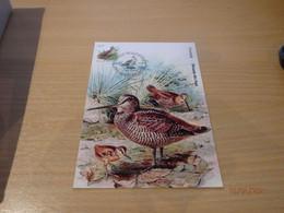 A. Buzin 3898 Houtsnip  RRR - 1985-.. Pájaros (Buzin)