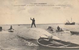 Cap-Ferret Par Arcachon : Baleine Capturée Par Des Marins à L'entrée Du Bassin - 1913 - Otros Municipios