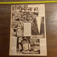 1934 PATI Pittoresque Recolte Du Houblon Poperinghe Alost - Unclassified