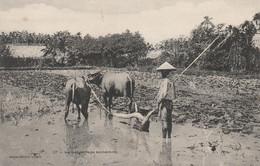VIET NAM LABOURAGE ANNAMITE PLANTE EDITEUR SAIGON PRECURSEUR - Vietnam