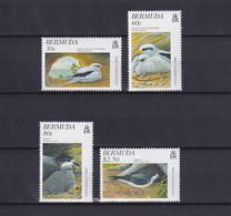 BERMUDA 1997, Mi# 723-726, Birds, MNH - Bermuda