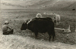 CPA AK Carte Photo Real Rural Scene Labor MACEDONIA SERBIA (709332) - Macedonia