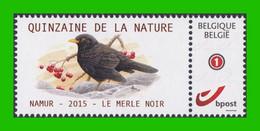 BUZIN - Merle Noir - Timbre + Folder - Quinzaine De La Nature - Namur 12/09/2015 - 1985-.. Birds (Buzin)