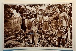 VARIE COLONIE SOMALIA COLTIVAZIONE DELLA BANANA IL TRASPORTO DOPO IL TAGLIO Formato Piccolo Non Viaggiata Anni '30 Foto - Somalia