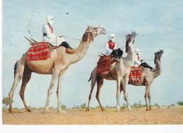 Sahara Espagnol Méharistes 1958 - Mauritania