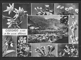 CODISAGO CODISSAGO BELLUNO VG. 1963 N° B279 - Belluno