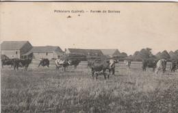 Pithiviers (Loiret) - Ferme De Senives - Pithiviers