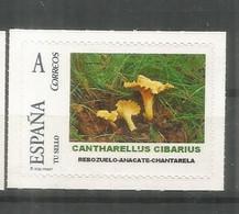 ESPAÑA TUSELLO SETAS HONGOS FUNGI MUSHROOM CANTHARELLUS CIBARIUS - Mushrooms
