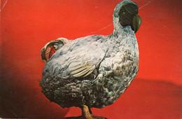 ~~ Ile Maurice - Le Dodo (gros Oiseau Disparu) - Mauritius