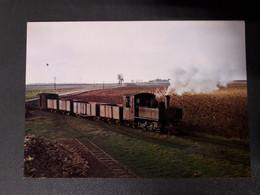 MUSEE DES TRANSPORT PETHIVIERS TRAIN  LOCOMOTIVE UN TRAIN DE BETTERAVES DANS LA CAMPAGNE BEAUCERONNE 1962 - Unclassified