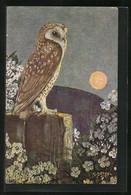 Künstler-AK Ein Nachtmusikant, Ansicht Einer Schleiereule - Birds