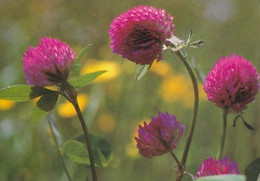 Flowers - Fleurs - Bloemen - Blumen - Fiori - Flores - Puna-apila - Red Clover - WWF Panda Logo - Pro Natura - Flowers