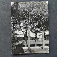 BRIONI - CROATIA, Postcard Traveled 1953 (aukR98) - Croatia