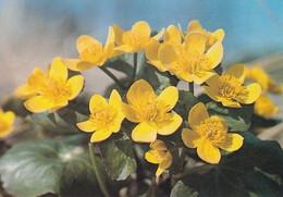 Flowers - Fleurs - Bloemen - Blumen - Fiori - Flores - Rentukka - (Caltha Palustris) - WWF Panda Logo - Flowers