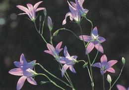 Flowers - Fleurs - Bloemen - Blumen - Fiori - Flores - WWF Panda Logo - Harakankello - Spreading Bell-flower - Flowers