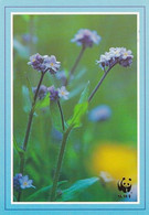 Flowers - Fleurs - Bloemen - Blumen - Fiori - Flores - Lemmikki - WWF Panda Logo (golden) - Forget-me-not - Flowers