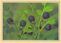 Berries - Blueberry - Mustikka - Vaccinium Myrtillus - WWF Panda Logo - Other