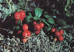 Berries - Lingonberry - WWF Panda Logo - Puolukka - Vaccinium Vitis-idaea - Other