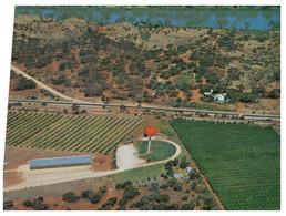(NN 9) Australia - SA - Riverland Big Orange (Fruit Géant) - Other
