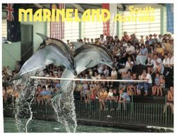 (NN 9) Australia - SA - Marineland Dolphin Show - Dolphins