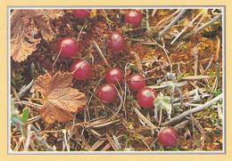 Berries - Isokarpalo - Cranberry - Vaccinium Oxycoccos - WWF Panda Logo - Other