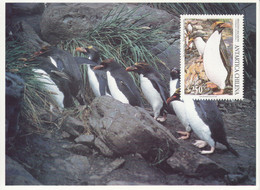 Chile 1993, Postal Stationery, Pre-stamped Postcard, Set Of 8 Cards, MNH** - Penguins