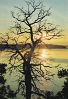 Summer Lake Landscape - Paysage De Lac D'été - WWF Panda Logo - Autumn Evening Sun - Autumn Nature - Other