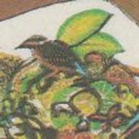 Saudi Arabia 1997, Bird, Birds, Kingfisher, Set Of 2v, MNH** - Other