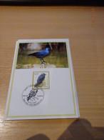 A. Buzin 3625 Kauw  RRR - 1985-.. Pájaros (Buzin)