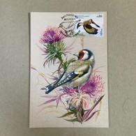 Madeira Portugal | Europa 2019 - Maxicard European Goldfinch - Sperlingsvögel & Singvögel