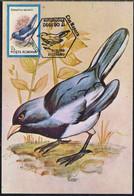 OISEAU - MERLE A MIROIR BLANC / 1992 ROUMANIE CARTE MAXIMUM (ref 8218) - Sperlingsvögel & Singvögel
