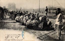 Convoi De Chameaux à Pekin En 1908 - Cina