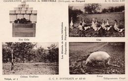 Coopérative Agricole De SIMEYROLS ( Oies , Porcs , Chenes Truffiers ... ) ; Voir Les Tarifs Au Dos . - Other Municipalities