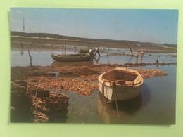 PARCS A HUITRES - Pesca