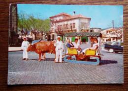Portugal, Funchal -Carte Postale - Char à Boeufs Typique - Altri