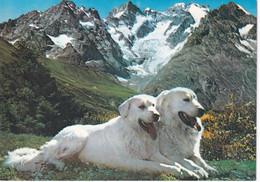 CHIENS  Des PYRENEES  -  VALLS D'ANDORRA - Andorra