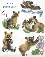 Carte Postale  Pere Castor Bourru L'ours Brun - Unclassified