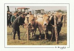 15 PAULHENC  CONCOURS DE LA RACE AUBRAC 1996 Elevage Pecoul - Andere Gemeenten