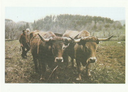 15  NEUVEGLISE  ATTELAGE DE BOEUFS  AUBRAC 1989 - Otros Municipios