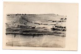 Carte Photo  -  Canal De Suez   -  Avant 1920 - Sues
