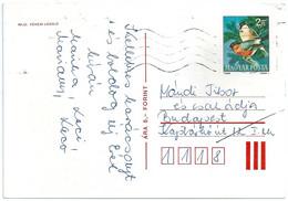 B9808 Hungary Prepaid Postcard Fauna Animal Bird - Sperlingsvögel & Singvögel