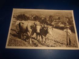 Cpa Themes Agriculture Le Labourage  En Morvan - Landbouw