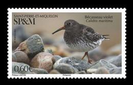 St. Pierre And Miquelon 2021 Mih. 1346 Fauna. Birds. Purple Sandpiper MNH ** - Nuovi