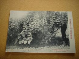 ZELDZAAM !! WESTMALLE ( MALLE BRECHT RIJKEVORSEL ZOERSEL ) - FERME ECOLE - CHAMP D'HELIANTI ( 1909 ) - Malle