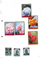 [701261]B/TB//O/Used-AJMAN - Fleurs, Rose - Roses